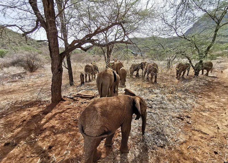 江一燕拍摄的大象.jpg