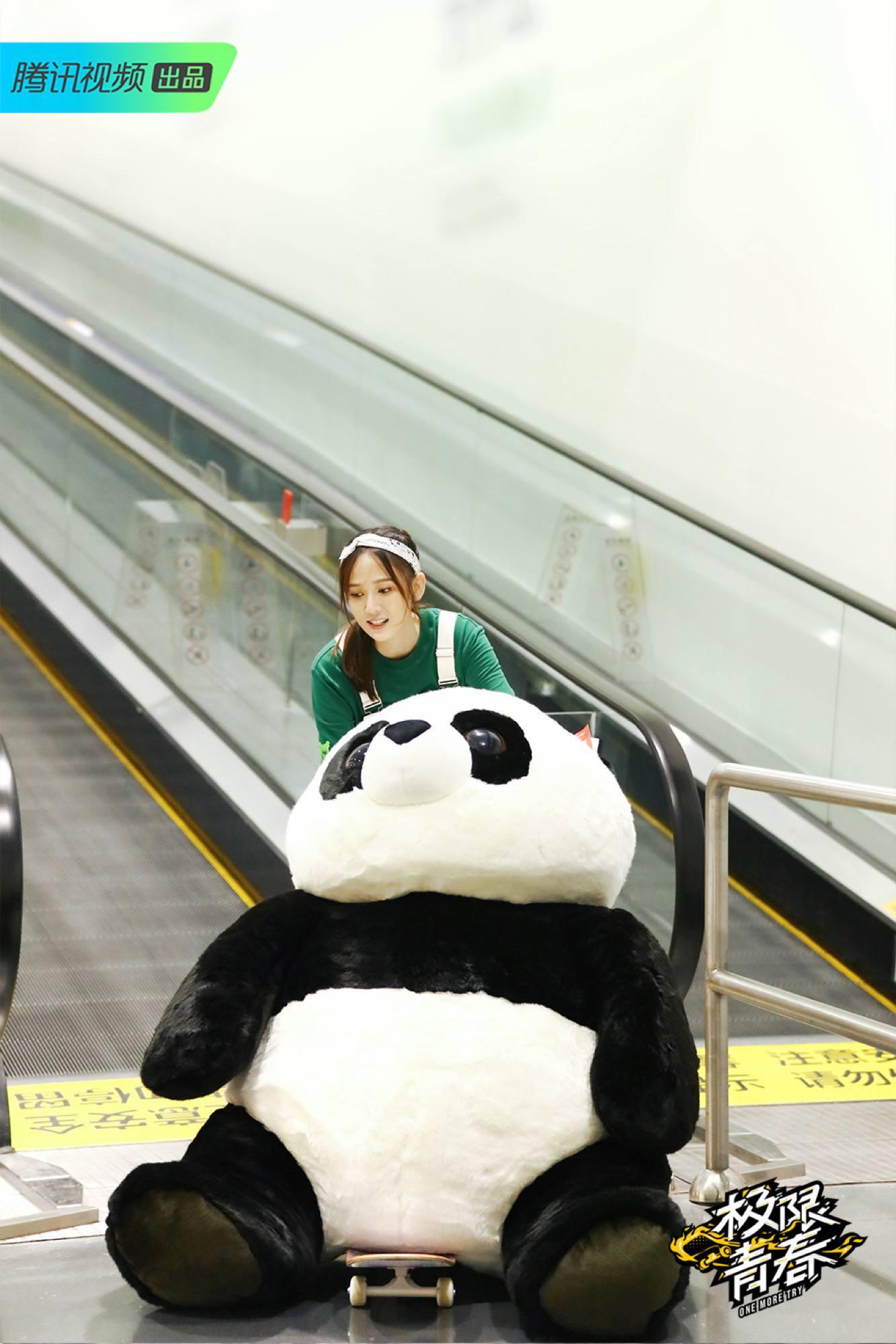 陈乔恩抱大熊猫.jpg