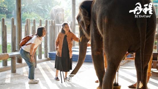 朱丹和大象.jpg