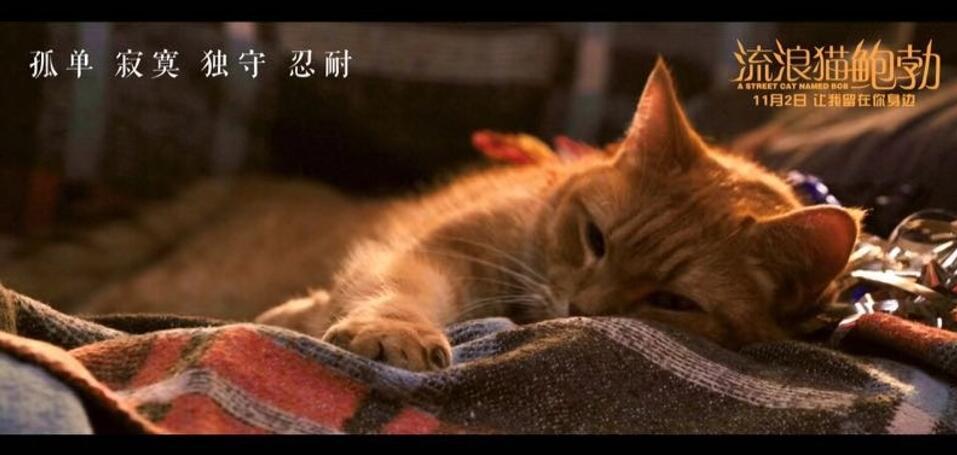 电影《流浪猫鲍勃》.jpg