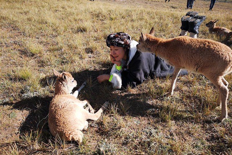 江一燕和藏羚羊.jpg