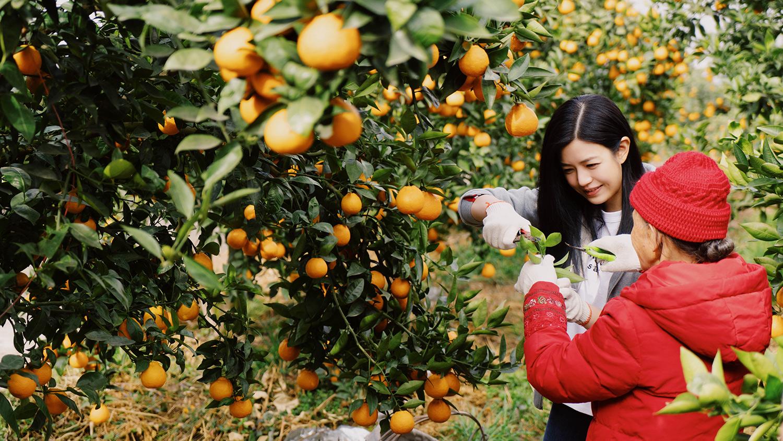 陈妍希在黄果柑园.jpg